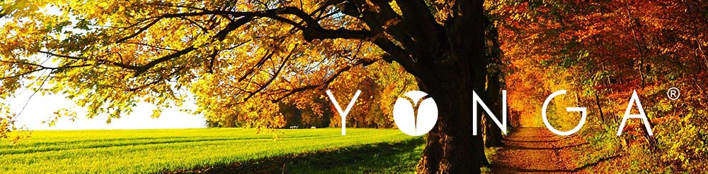 Neue YONGA® Release ist online!